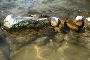 nuisance algae
