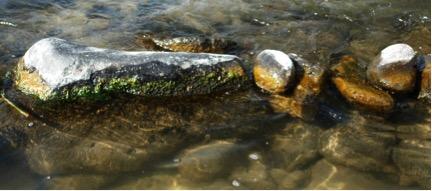 Stalked diatom algae covering splash zone of rocks in lower Deschutes River. Photo by Greg McMillan.
