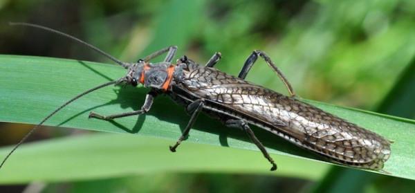 Bug 1